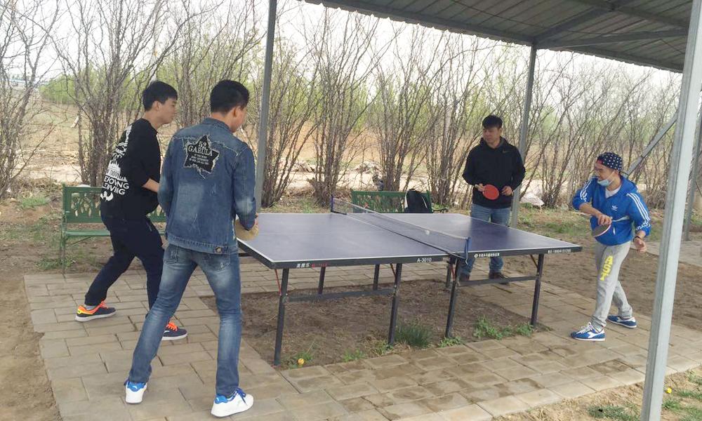 朝阳网站制作公司健身乒乓
